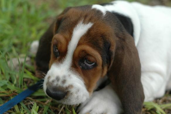 Sad puppy face